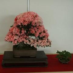 Rugsėjį Vilniuje – IV-asis Japonijos menų festivalis