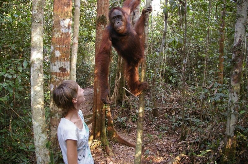 With orangutan in Borneo (Kalimantan) island